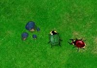 guerre, coccinelle, arme, bataille, insectes, combat, stratégie