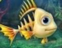 aquarium, poissons, reflexion, serie de trois, serie de 3, observation, alignement, puzzle