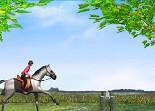 cheval, saut d'obstacles, équitation