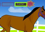 cheval, galop, habillage, trot