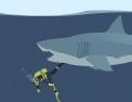 adresse, requin, poursuite, squale,plongeur