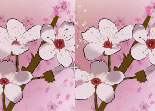 5 différences, observation, 5 erreurs, fleurs