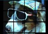 casse-tête, réflexion, observation, puzzle, chien